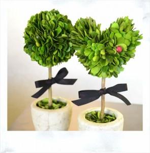 サロン内の観葉植物